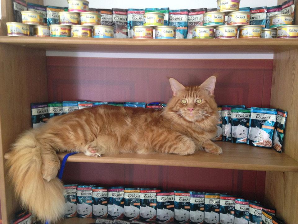 Питание мейн куна - Сaramelcat